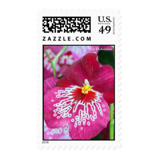 Miltonia orchid flower postage stamp