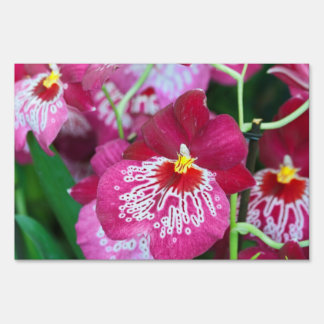 Miltonia orchid flower yard sign