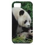 Mime a la panda y al bebé en el arbusto de bambú, funda para iPhone SE/5/5s