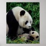 Mime a la panda y al bebé en el arbusto de bambú,  posters