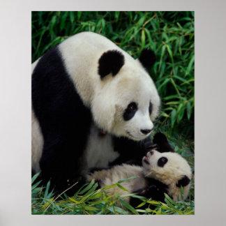 Mime a la panda y al bebé en el arbusto de bambú posters