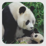 Mime a la panda y al bebé en el arbusto de bambú, pegatina cuadrada