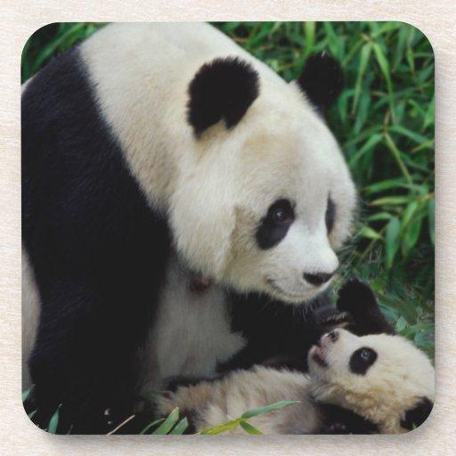 Mime a la panda y al bebé en el arbusto de bambú,  posavaso