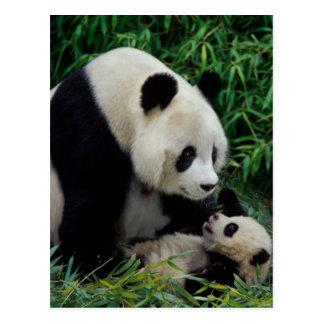 Mime a la panda y al bebé en el arbusto de bambú, postal