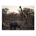 Mime al rinoceronte y al rinoceronte joven en un l postales