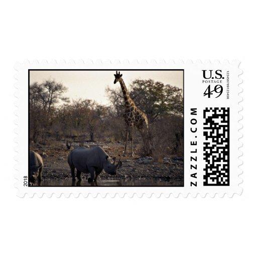 Mime al rinoceronte y al rinoceronte joven en un franqueo