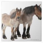 Mime y para sonriendo, caballo belga, belga azulejo cuadrado grande