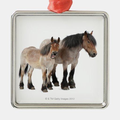 Mime y para sonriendo, caballo belga, belga ornamento para reyes magos