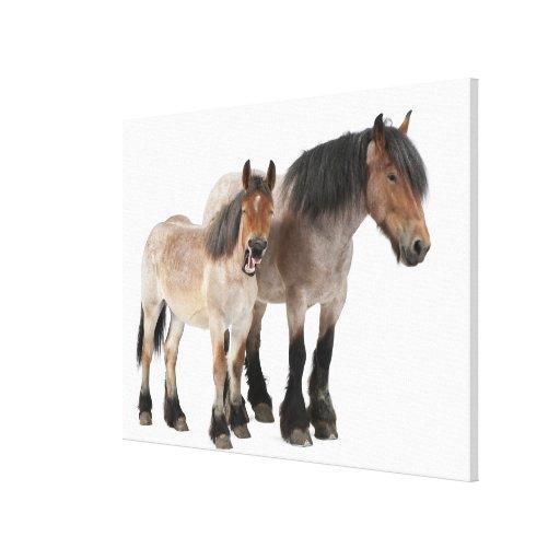 Mime y para sonriendo, caballo belga, belga impresión en lienzo