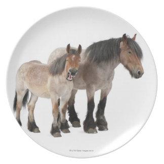 Mime y para sonriendo, caballo belga, belga platos
