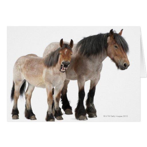 Mime y para sonriendo, caballo belga, belga tarjeta de felicitación