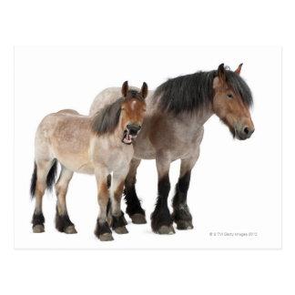 Mime y para sonriendo, caballo belga, belga postales