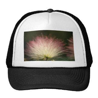 Mimosa de la fibra óptica gorras