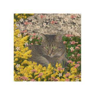 Mimosa el gato de tigre en flores amarillas del cuadros de madera