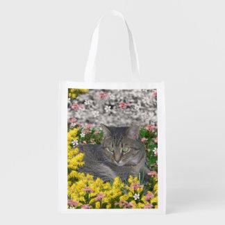 Mimosa el gato de tigre en flores amarillas del bolsa de la compra