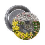 Mimosa el gato de tigre en flores del Mimosa Pins
