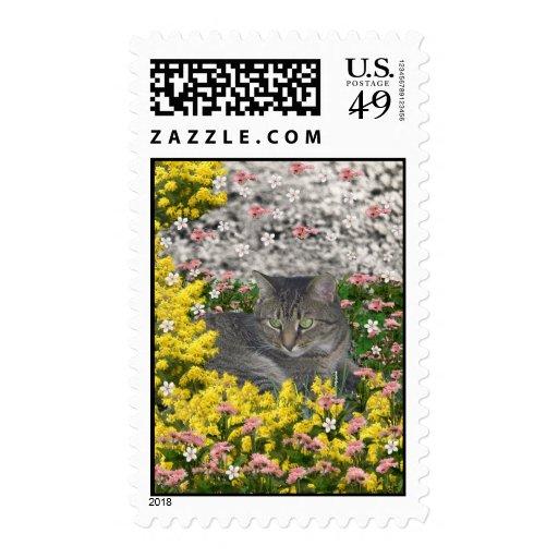 Mimosa el gato de tigre en flores del Mimosa Franqueo
