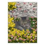 Mimosa el gato de tigre en flores del Mimosa Felicitación
