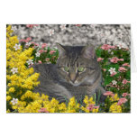 Mimosa el gato de tigre en flores del Mimosa Tarjetón