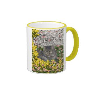 Mimosa el gato de tigre en flores del Mimosa Tazas De Café