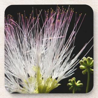 Mimosa Posavaso