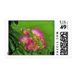 Mimosa Postage Stamp