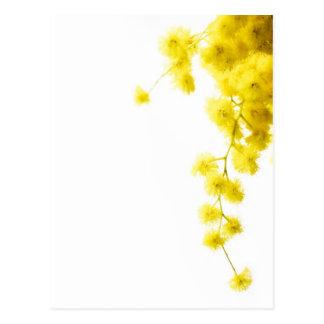 Mimosa Postcard