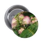 mimosa que florece 2010 pins