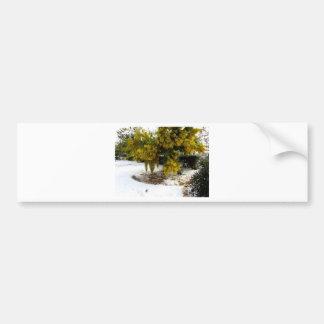 Mimosa tree in the snow bumper sticker