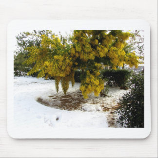 Mimosa tree in the snow mouse pad