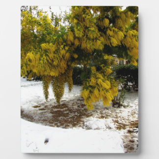 Mimosa tree in the snow plaque