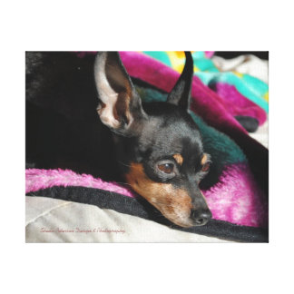 Min Pin_238 Wrapped Canvas Stretched Canvas Print