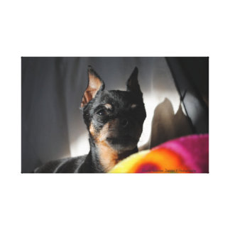 Min Pin_260 Wrapped Canvas Stretched Canvas Print