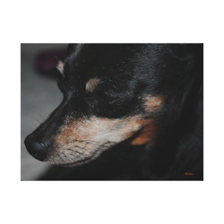 Min Pin_305 Wrapped Canvas Canvas Print