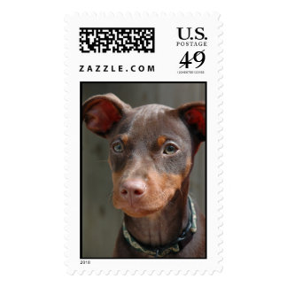 Min Pin Stamp