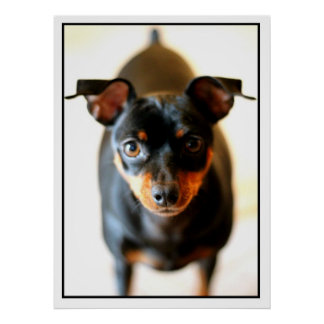 Min Pin Posters
