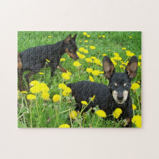Min Pins Playing in Dandylions Puzzle