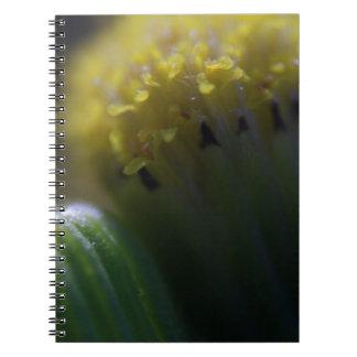 Mina de oro notebook