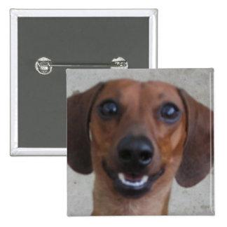 Minature Dachshund Pinback Buttons