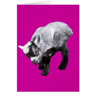Minature Goat Scratching Card