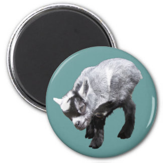 Minature Goat Scratching Magnet