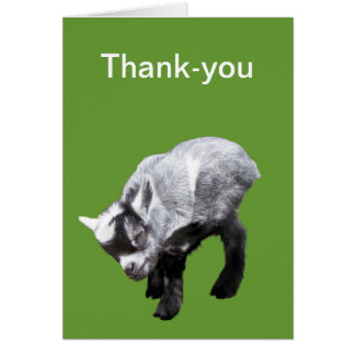 Minature Goat Scratching Thank-you Card