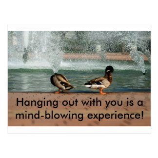 Mind-Blowing Experience Duck Postcard