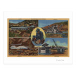 Minería aurífera en California - Quarz, rastra Tarjeta Postal
