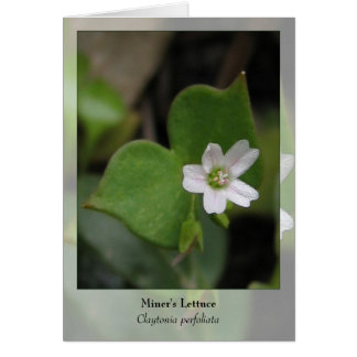 Miner's Lettuce - Native Notecard Stationery Note Card