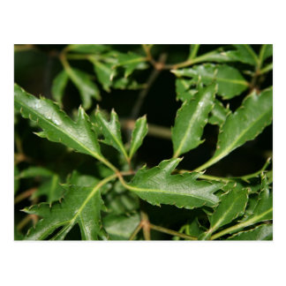 ming arelia leaves photo postcards