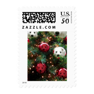 Mini American Eskimo Postage