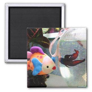Mini amigos de los pescados del arte imán cuadrado