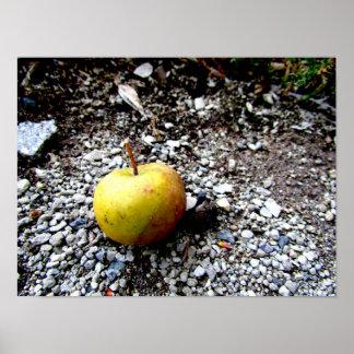 Mini apple sitting on the gravel poster