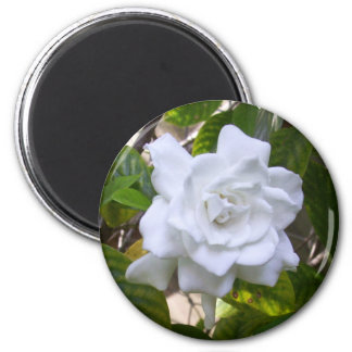 Mini Art Gardenia Magnet